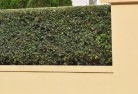 Albany Decorative fencing 30